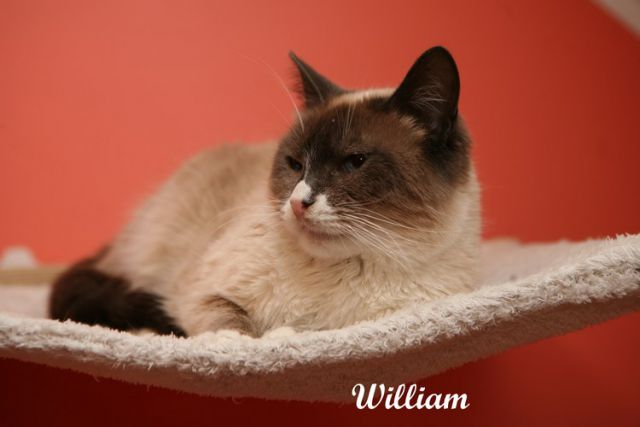 William